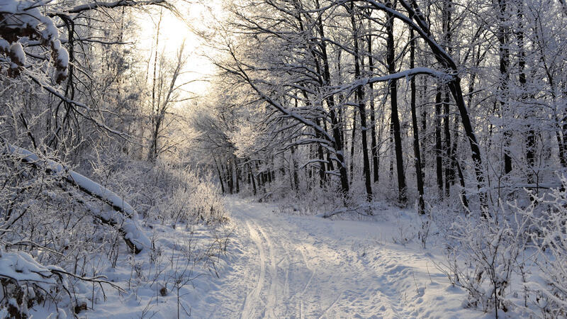 The best winter wallpaper on your desktop / part 2 Природа, The best winter wallpaper on your desktop, Desktop Wallpapers, Winter, Forests, Sunset, Sunrise id30967627
