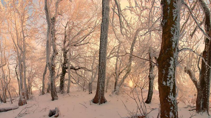 Кращі фотошпалери зими на робочий стіл Природа, Кращі фотошпалери зими на робочий стіл, Шпалери для робочого столу, Зима, Ліси, Захід Сонця, Схід Сонця id2106689210
