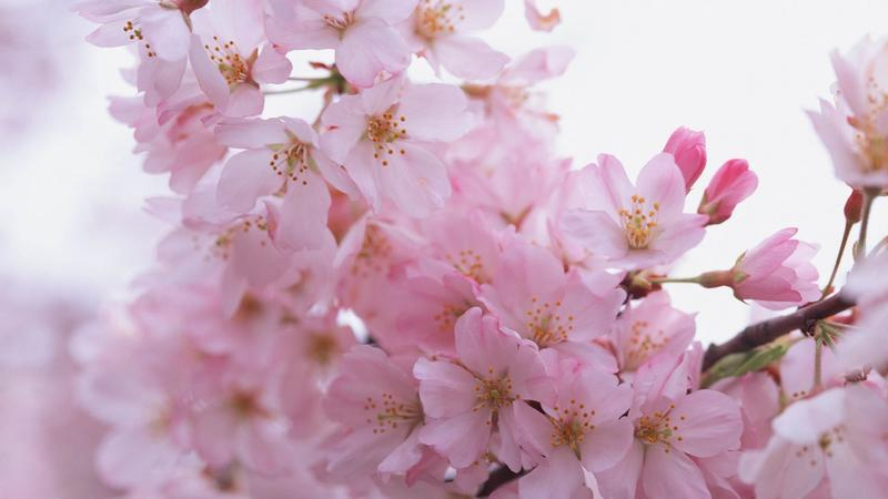 The most beautiful colorful flowers Nature, Flowers, Magnolia, Gerber, Chrysanthemum, Rose, Camomile 117946823