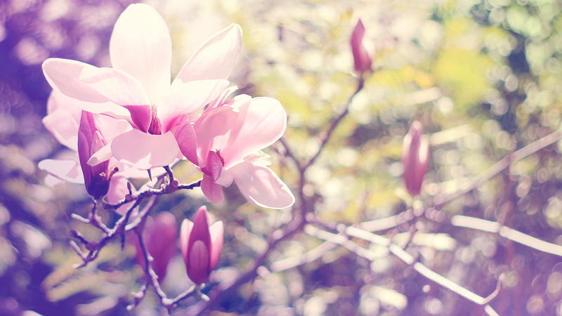 The most beautiful colorful flowers Nature, Flowers, Magnolia, Gerber, Chrysanthemum, Rose, Camomile 155739820