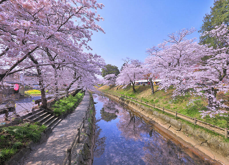 Найновіші Фотошпалери Цвітіння Сакури в Японії Природа, Фотошпалери Цвітіння Сакури, Фотошпалери японської Сакури, Фотошпалери квіти, Фотошпалери Японія id1910550679