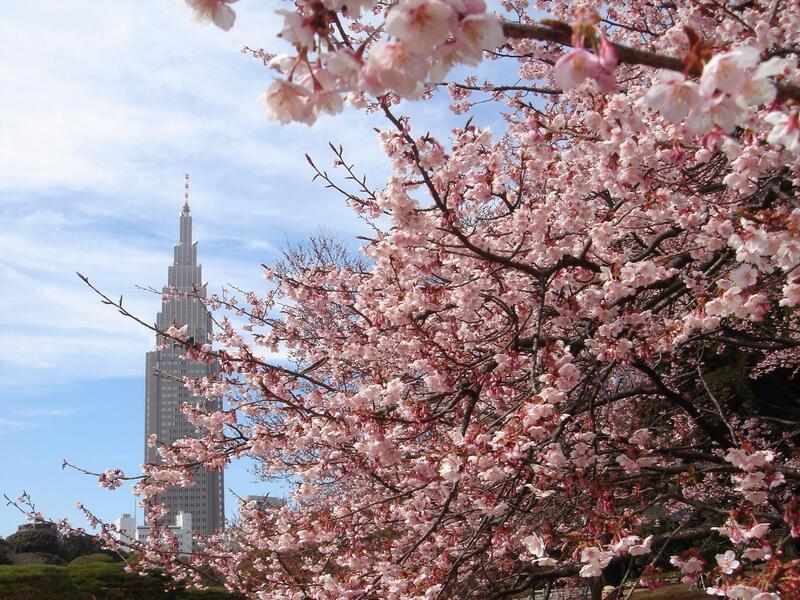 Найновіші Фотошпалери Цвітіння Сакури в Японії Природа, Фотошпалери Цвітіння Сакури, Фотошпалери японської Сакури, Фотошпалери квіти, Фотошпалери Японія id915235566