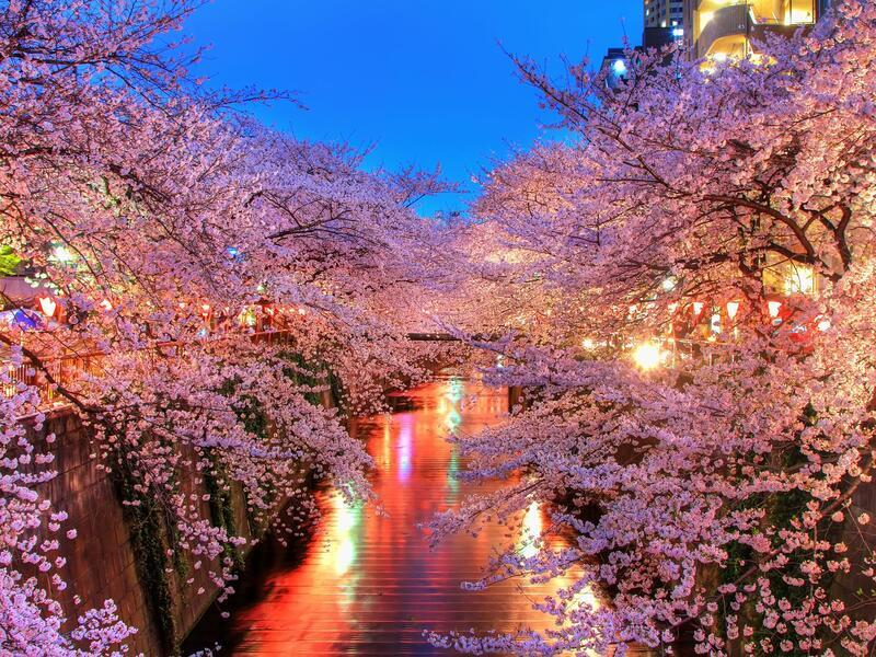Newest Japan Sakura Blossom Wallpapers Природа, Wallpapers Sakura blossom, Wallpapers Japanese Sakura, Wallpapers flowers, Wallpapers Japan id1043867821