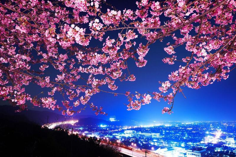 Newest Japan Sakura Blossom Wallpapers Природа, Wallpapers Sakura blossom, Wallpapers Japanese Sakura, Wallpapers flowers, Wallpapers Japan id456910245