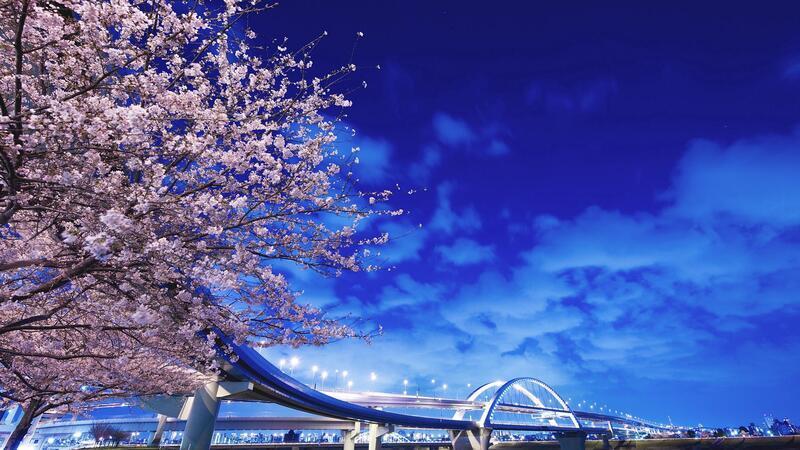 Новейшие Фотообои Цветения Сакуры в Японии Природа, Фотообои Цветение Сакуры, Фотообои японской Сакуры, Фотообои цветы, Фотообои Япония id159616646