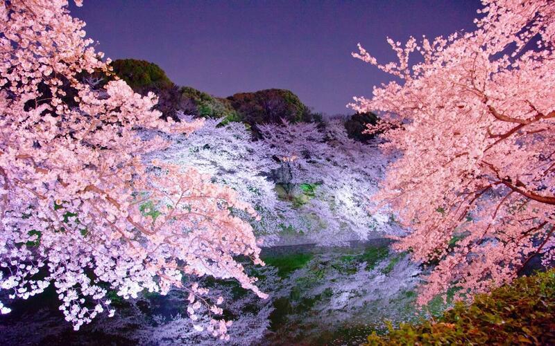 Найновіші Фотошпалери Цвітіння Сакури в Японії Природа, Фотошпалери Цвітіння Сакури, Фотошпалери японської Сакури, Фотошпалери квіти, Фотошпалери Японія id2127264507