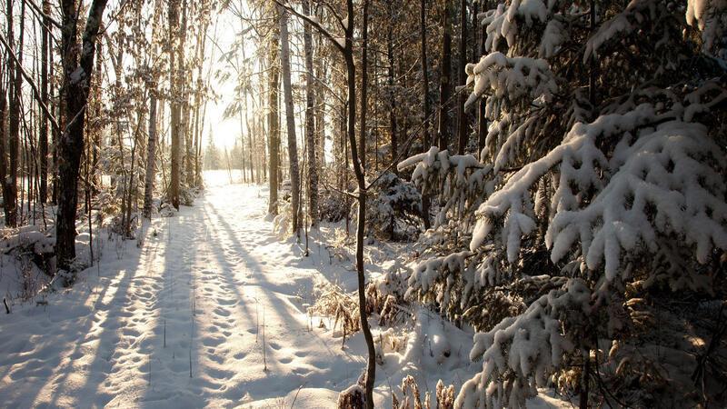 The best winter wallpaper on your desktop Природа, The best winter wallpaper on your desktop, Desktop Wallpapers, Winter, Forests, Sunset, Sunrise id890391333