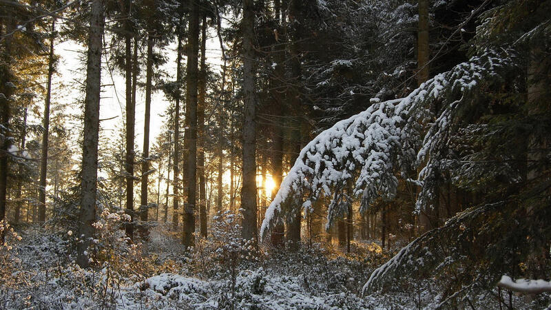 The best winter wallpaper on your desktop Природа, The best winter wallpaper on your desktop, Desktop Wallpapers, Winter, Forests, Sunset, Sunrise id329639461