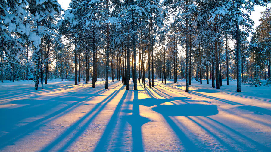 Фотообои красивых и загадочных Зимних Лесов Природа, Зима, Лес, Закаты, Восходы id1099430490