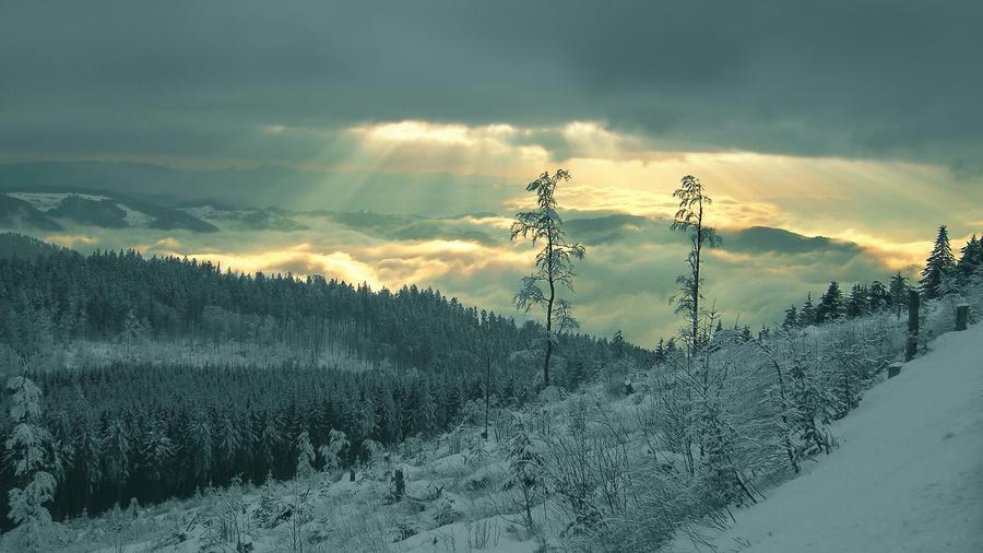 Фотошпалери красивих та загадкових Зимових Лісів Природа, Зима, Ліс, Захід Сонця, Схід Сонця id1562057960