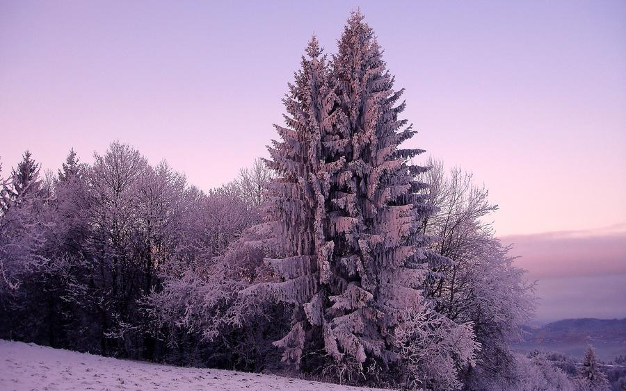 Фотошпалери красивих та загадкових Зимових Лісів Природа, Зима, Ліс, Захід Сонця, Схід Сонця id1390396229