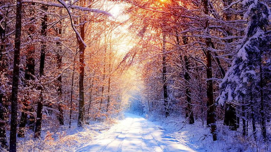Фотошпалери красивих та загадкових Зимових Лісів Природа, Зима, Ліс, Захід Сонця, Схід Сонця id401681279