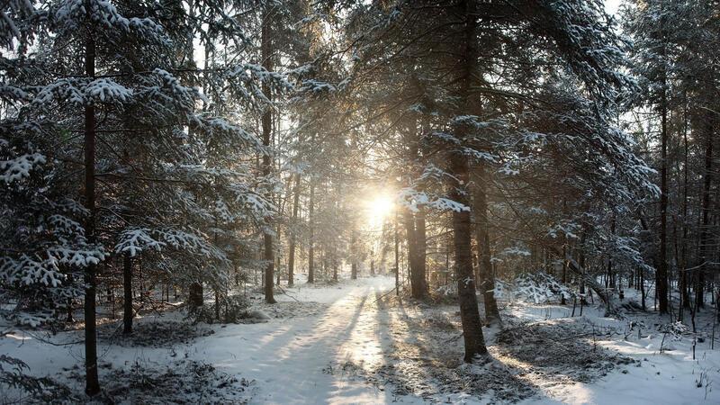 Лучшие фотообои зимы на рабочий стол Природа, Лучшие фотообои зимы на рабочий стол, Обои для рабочего стола, Зима, Леса, Закат солнца, Восход солнца id1200713603