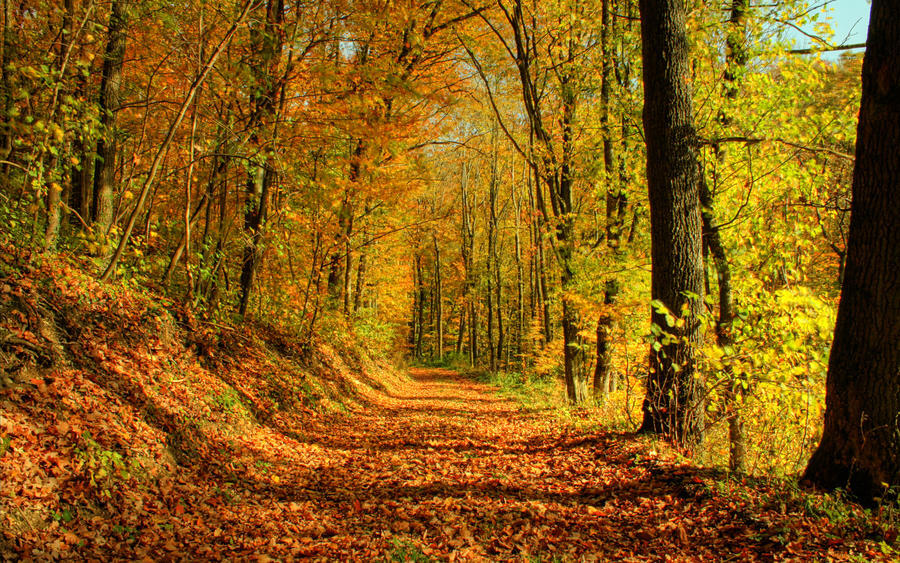 Вибрані Шпалери Золотої Осені Природа, Ліс, Осінь id2111036054