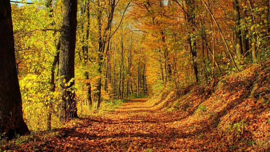 Избранные Обои Золотой Осени Природа, Лес, Осень id1676614379