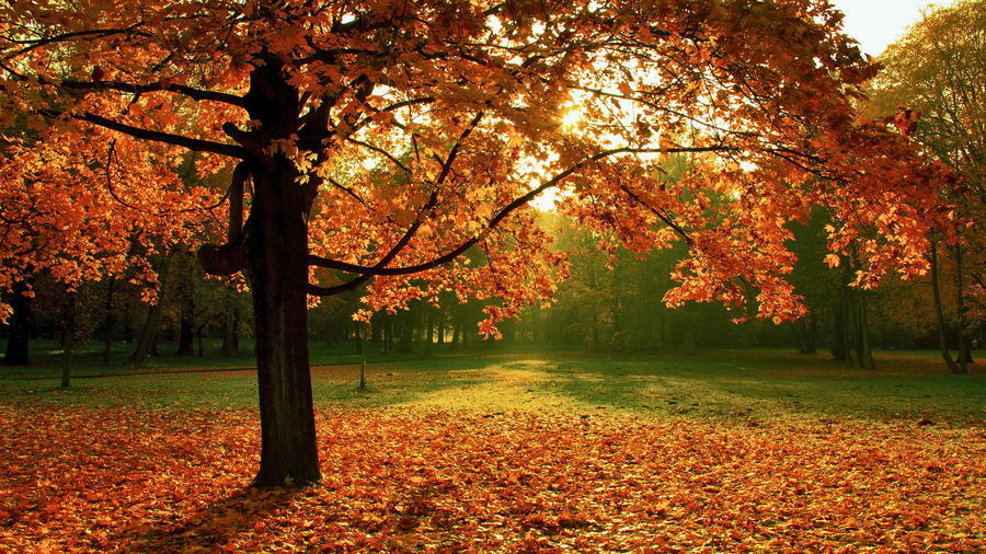 Selected Golden Autumn Wallpapers Nature, Forest, Autumn id424602817