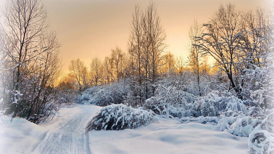 Photo wallpapers of beautiful and mysterious Winter Forests Nature, Winter, Forest, Sunset, Sunrise id160265242