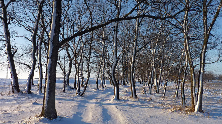 Photo wallpapers of beautiful and mysterious Winter Forests Nature, Winter, Forest, Sunset, Sunrise id731000618