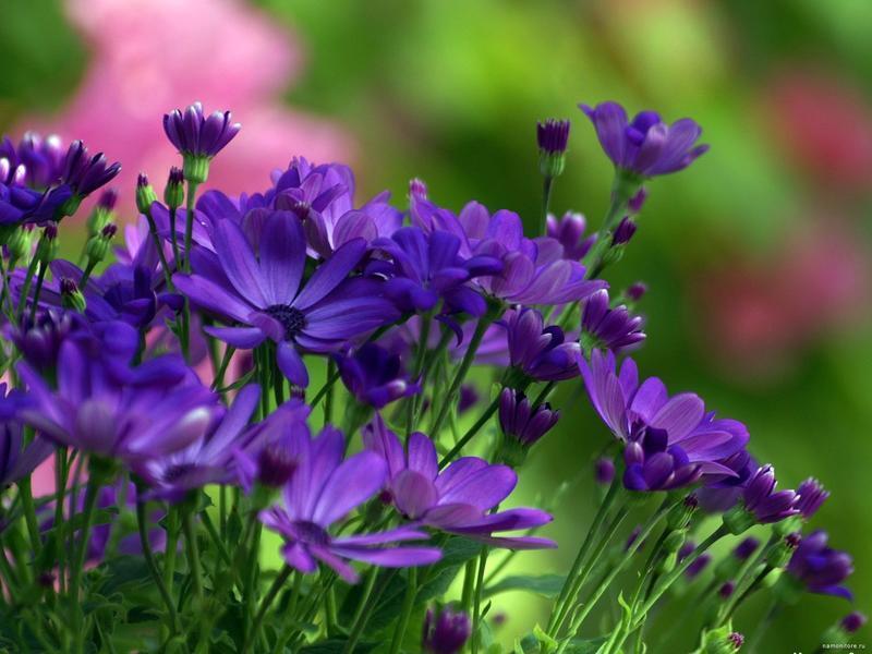 Найчудовіші мальовничі квіти Природа, Квіти, Магнолія, Гербера, Хризантема, Троянда, Ромашка id1944330976