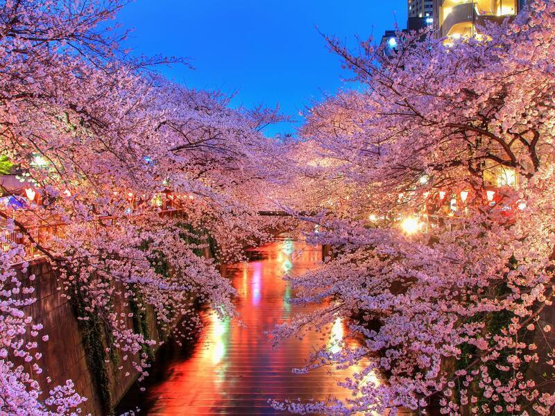 Newest Japan Sakura Blossom Wallpapers Природа, Wallpapers Sakura blossom, Wallpapers Japanese Sakura, Wallpapers flowers, Wallpapers Japan id1779184836