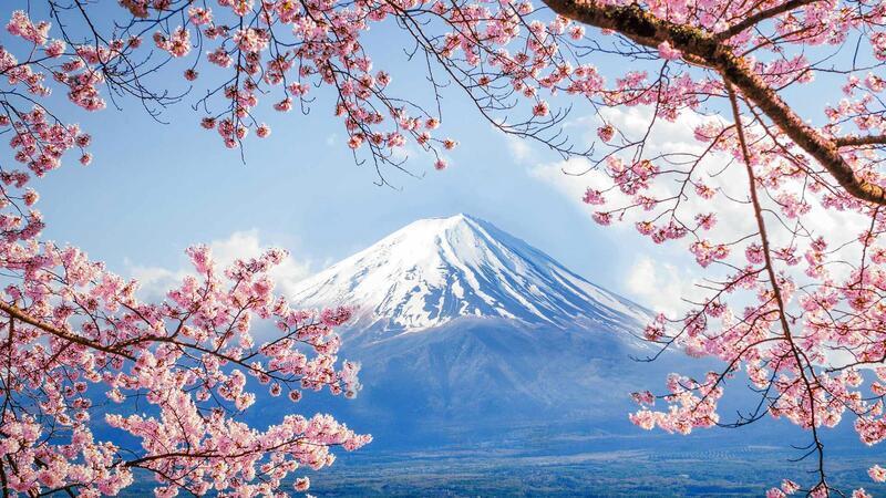 Newest Japan Sakura Blossom Wallpapers Природа, Wallpapers Sakura blossom, Wallpapers Japanese Sakura, Wallpapers flowers, Wallpapers Japan id227641321
