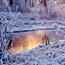 The best winter wallpaper on your desktop Природа, The best winter wallpaper on your desktop, Desktop Wallpapers, Winter, Forests, Sunset, Sunrise id621132114