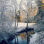 Фотообои красивых и загадочных Зимних Лесов Природа, Зима, Лес, Закаты, Восходы id295711153