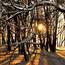 Кращі фотошпалери зими на робочий стіл Природа, Кращі фотошпалери зими на робочий стіл, Шпалери для робочого столу, Зима, Ліси, Захід Сонця, Схід Сонця id1566362972