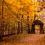 Вибрані Шпалери Золотої Осені Природа, Ліс, Осінь id1630499479