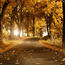 Selected Golden Autumn Wallpapers Nature, Forest, Autumn id1604812258
