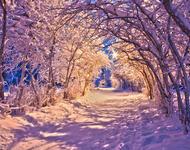 The best winter wallpaper on your desktop / part 2 Природа, The best winter wallpaper on your desktop, Desktop Wallpapers, Winter, Forests, Sunset, Sunrise id511513554
