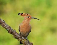 Экзотические Птицы в природе Природа, Птицы, Экзотика id1170663581