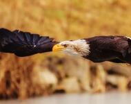 Екзотичні Птахи у природі Природа, Птахи, Екзотика id2005125815