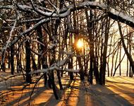 Фотообои красивых и загадочных Зимних Лесов Природа, Зима, Лес, Закаты, Восходы id1137755391
