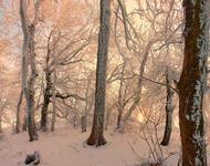 Фотообои красивых и загадочных Зимних Лесов Природа, Зима, Лес, Закаты, Восходы id2024197402