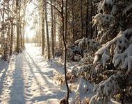 Фотообои красивых и загадочных Зимних Лесов Природа, Зима, Лес, Закаты, Восходы id782914702