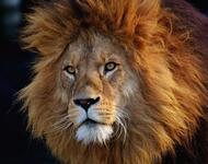 Фотообои на тему - В сказочном мире Природы Природа, Птицы, Животные, Собачки, Кошечки, Еноты, Лев, Белочки id1293308931