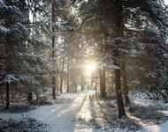 Фотошпалери красивих та загадкових Зимових Лісів Природа, Зима, Ліс, Захід Сонця, Схід Сонця id438651557