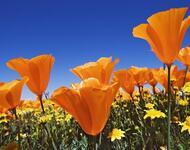 Найчудовіші мальовничі квіти Природа, Цветы, Магнолия, Гербера, Хризантема, Роза, Ромашка id102922202