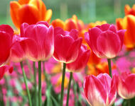 Найчудовіші мальовничі квіти Природа, Цветы, Магнолия, Гербера, Хризантема, Роза, Ромашка id1756967377