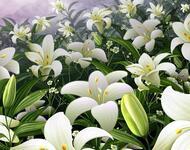 Найчудовіші мальовничі квіти Природа, Цветы, Магнолия, Гербера, Хризантема, Роза, Ромашка id132640243