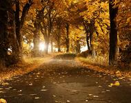 Вибрані Шпалери Золотої Осені Природа, Ліс, Осінь id480159201