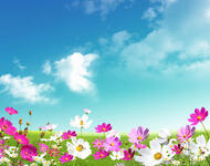 The most beautiful colorful flowers Nature, Flowers, Magnolia, Gerber, Chrysanthemum, Rose, Camomile id525114071