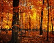 Избранные Обои Золотой Осени Природа, Лес, Осень id1289527275