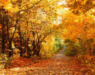 Избранные Обои Золотой Осени Природа, Лес, Осень id849343786