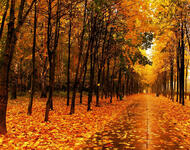 Selected Golden Autumn Wallpapers Nature, Forest, Autumn id307693568