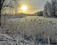 Photo wallpapers of beautiful and mysterious Winter Forests Nature, Winter, Forest, Sunset, Sunrise id479919142