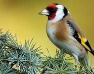 Exotic Birds in Nature Nature, Birds, Exotic id879206833