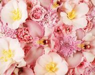 Найчудовіші мальовничі квіти Природа, Квіти, Магнолія, Гербера, Хризантема, Троянда, Ромашка id1806001925