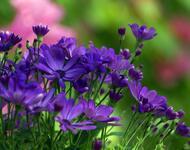Найчудовіші мальовничі квіти Природа, Квіти, Магнолія, Гербера, Хризантема, Троянда, Ромашка id686430383